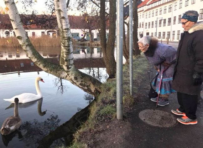 Bessie Omilgoetok and Joseph Tikhak admire the Danish national bird, the kuugyuq, as they arrive at the Danish National Museum Dec. 4. Omilgoetok and Tikhak were part of a Kitikmeot delegation that visited Copenhagen, Denmark,  as part of a joint research project with the museum on Knud Rasmussen's Thule Expedition. The Greenlandic-born explorer, who spoke Kalaallisut (Greenlandic Inuktitut,) was the first to travel the entire Northwest passage via dogsled. Rasmussen made five Thule expeditions, his last, and most famous, from 1921 to 1924, during which a team of seven, including Inuit guides, travelled 18,000 miles from Greenland to the Pacific Ocean. The Kitikmeot delegation of elders and researchers  examined and identified a collection of artifacts Rasmussen gathered from what is now western Nunavut. See more photos on the Kitikmeot Heritage Society's Facebook page. (PHOTO COURTESY OF KHS)
