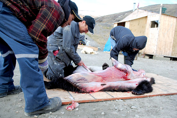 Elijah Ningiuruvik made a surprise catch June 13 when he killed a young black bear cub just outside of Kangiqsujuaq. Local hunters say it's the fifth one seen in the immediate region in recent history. Ningiuruvik was pictured in Nunatsiaq News this past winter when he killed another unusual visitor to the area – a  polar bear wandering not far from the village. (PHOTO BY SARAH ROGERS)