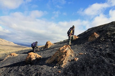 Ellesmere Island today: its Strathcona fossil forest, with its 50-million-year-old tree trunks, is typical of the High Arctic sites scientists study to better understand what a warmer climate means for that polar region.(PHOTO COURTESY OF JAELYN EBERLE)
