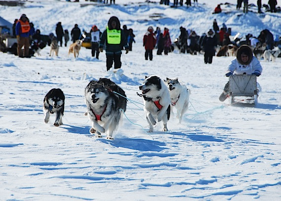 Nunavik's Ivakkak dog team racers are off! Wearing number 1, Billy Cain of Tasiujaq, races his dog team away across the starting line in Puvirnituq at 10:30 a.m. on March 28. (PHOTO BY ISABELLE DUBOIS/ NUNAVIK TOURISM)