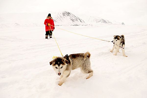For six days, the Piksuk Media crew travelled with 17 dog teams and their 118 helpers along the east coast of Baffin Island to produce