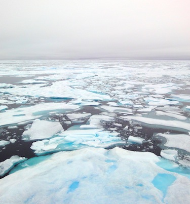"WWF hosted a two-day ""Last Ice Area"" workshop in Iqaluit on the decline of sea ice in the Arctic Ocean and its"
