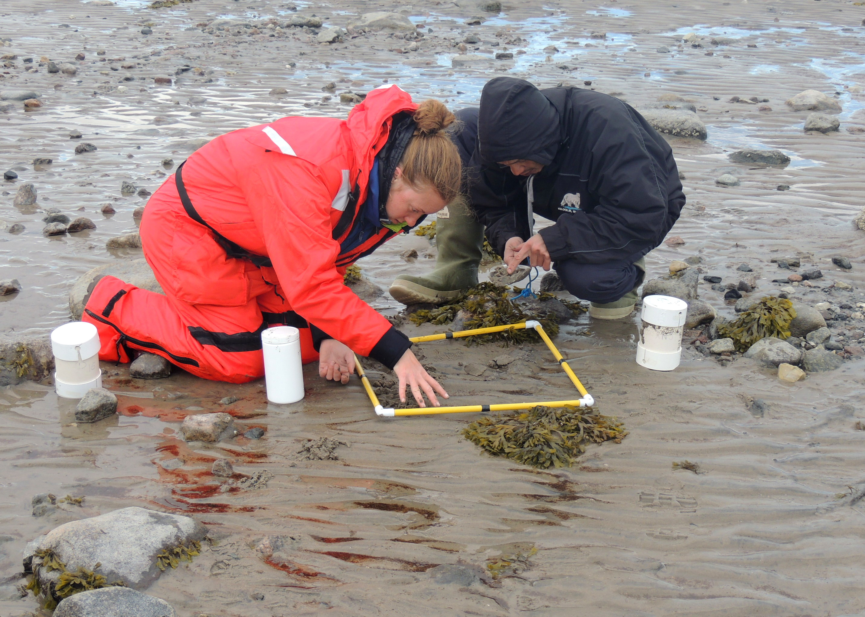 DFO scientist Kristen Adair and Gary Illupaalik, a member of the local field crew, collect invertebrate samples in the mud at low tide in Steensby Inlet in north Baffin. Researchers are concerned about how future shipping traffic to the Mary River iron mine might bring new species into the waters there. (PHOTO COURTESY OF DFO)
