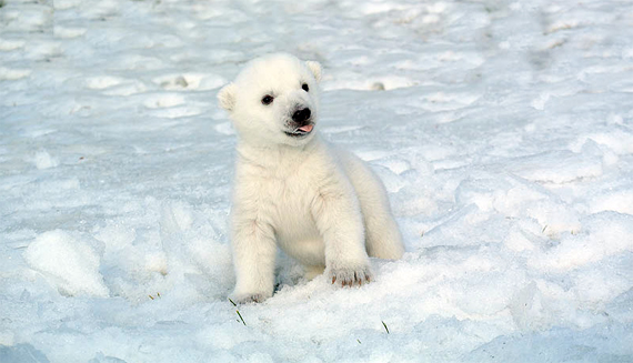 Toronto Zoo officials have suggested Searik as a possible name for its three-month-old polar bear cub, saying it means