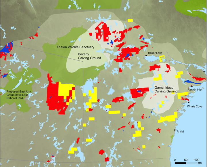 A 2011 map showing the range of the Beverly and Qamanirjuaq caribou herds and their calving grounds as well as mineral leases (blue), mineral claims (red), prospecting permits (yellow), and protected areas (light green) in the area. The blue spot surrounded by red, just west of Baker Lake, is where Areva hopes to build its uranium mine. Other maps on the BQCMB website show numerous uranium company mineral claims on traditional caribou calving grounds. (PHOTO COURTESY OF BQCMB)