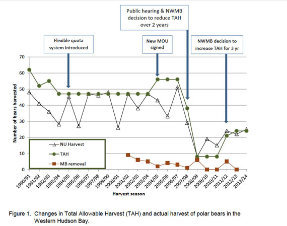Follow the bouncing polar bear quota. This graph shows the abrupt changes to the total allowable harvest for the western Hudson Bay polar bear sub-population that occurred after 2005. The Nunavut Wildlife Management Board now recommends a quota of 38, but the Government of Nunavut has yet to make a decision. (IMAGE EXTRACTED FROM GN SUBMISSION TO THE NWMB)