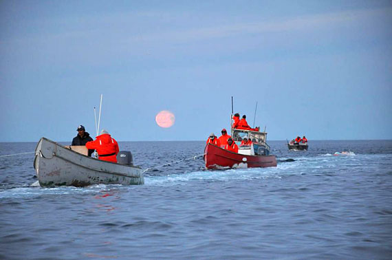 Part of the flotilla of six boats and about two dozen hunters that participated in Igloolik's 2016 bowhead whale hunt. (PHOTO COURTESY OF GEORGE QULAUT)