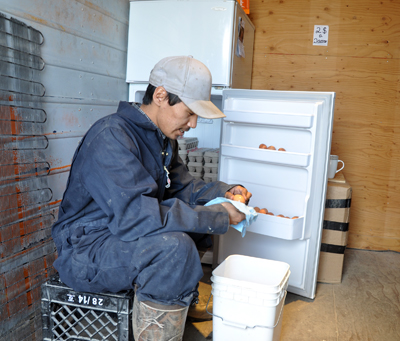 Sammy Tooma cleans eggs at Kuujjuaq's hen house in May. The local Anguvigak hunters and trappers organization plans to build a larger facility to house the birds, which lay around 100 eggs each day. (PHOTO BY SARAH ROGERS)