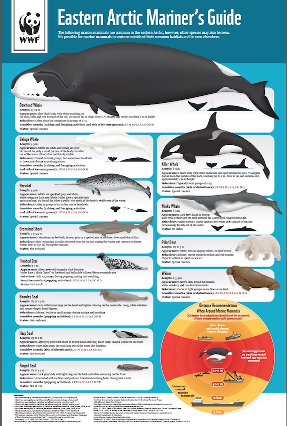 Here's one of the posters of various marine mammals included in the Eastern Arctic Mariner's Guide, released May 16 by WWF-Canada.