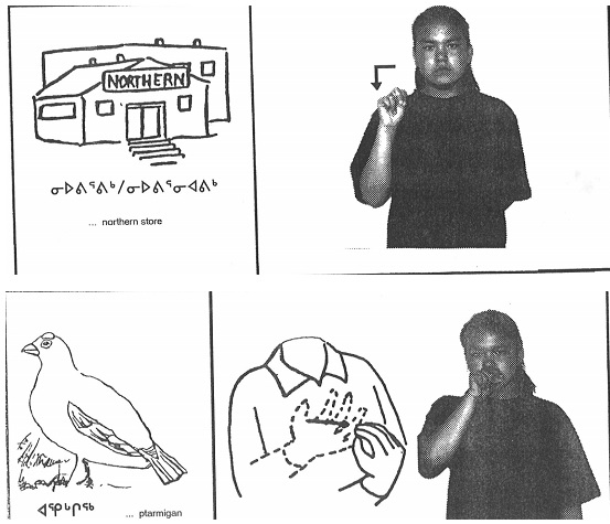 Here are some examples of Nunavik-specific signs for the terms Northern Store (top) and ptarmigan (bottom) from the American Sign Language and Inuit Signs manual developed in the 1990s by the Kativik School Board. The images were drawn by Pasha Angnatuk. (IMAGES COURTESY OF KI)