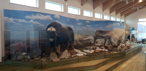 An Arctic animals display at the new visitor centre in Rankin Inlet. (PHOTO COURTESY OF THE GOVERNMENT OF NUNAVUT)