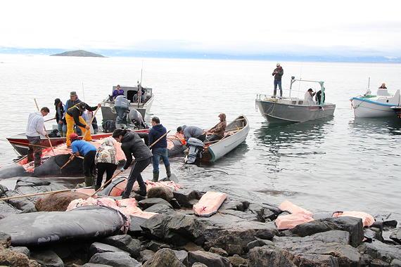 Nunavut hunters, harvesters rejoice over bowhead whale catch