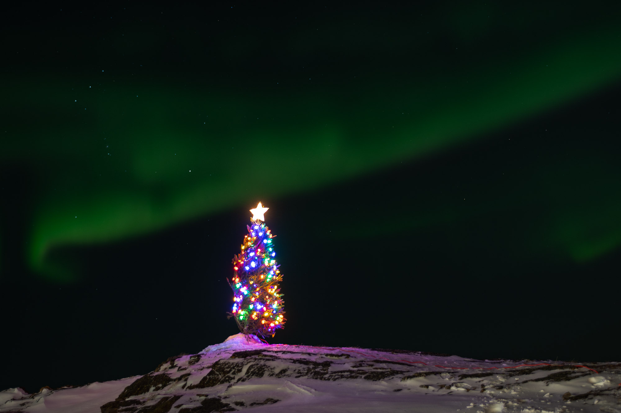 The northern lights dance around a Christmas tree in Iqaluit's Tundra Ridge neighbourhood in the week leading up to Christmas. (Photo by Dustin Patar)