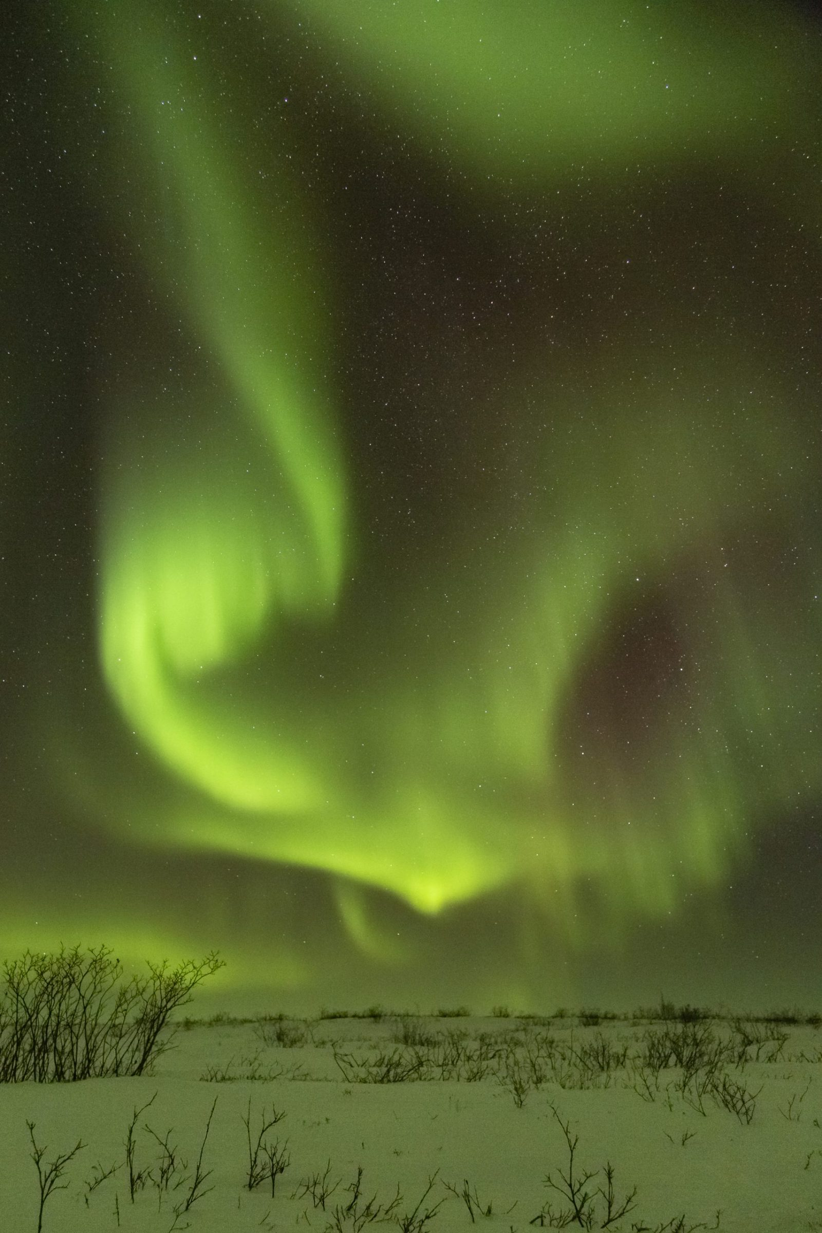 The northern lights glow above the tundra outside Kugluktuk on a cold night (-37 C) on Dec. 20. (Photo by Mathieu Dumond / Umingmak Productions Inc.)