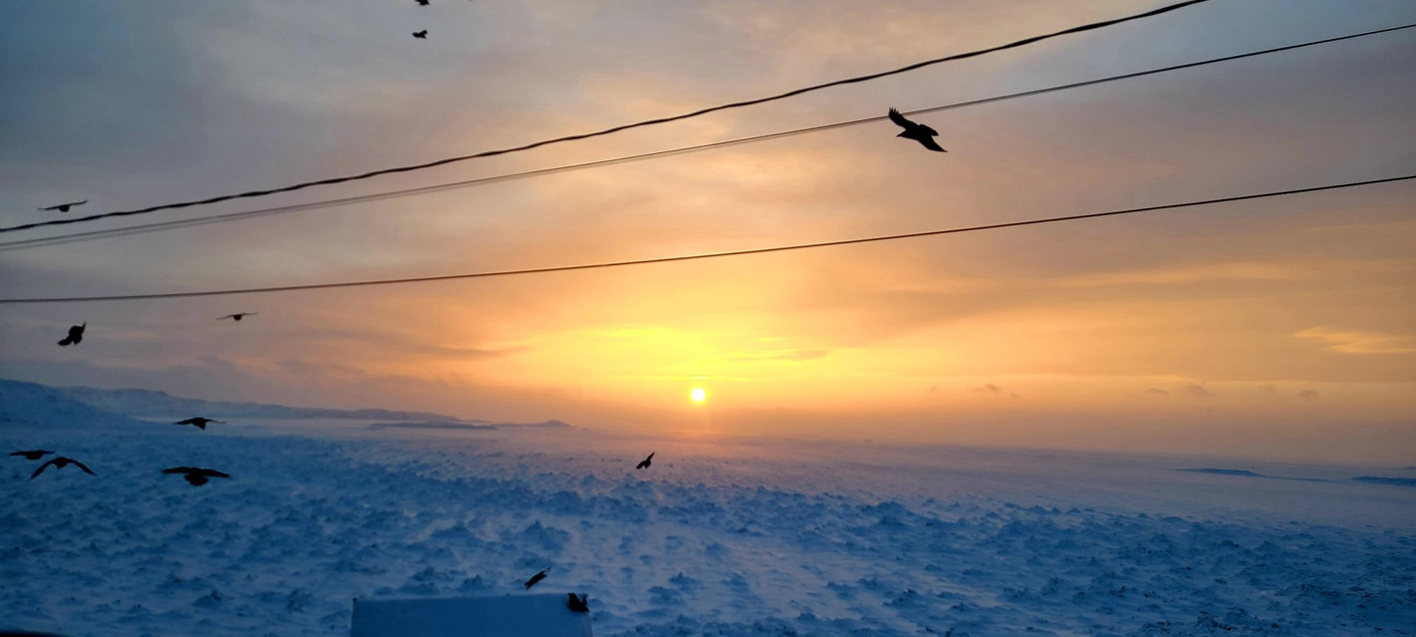A conspiracy of ravens  is spotted out scavenging for food around Tundra Valley in the waning daylight Dec. 28, following a two-day blizzard that hit Iqaluit and communities in the region. (Photo by Maggie Kuniliusie)