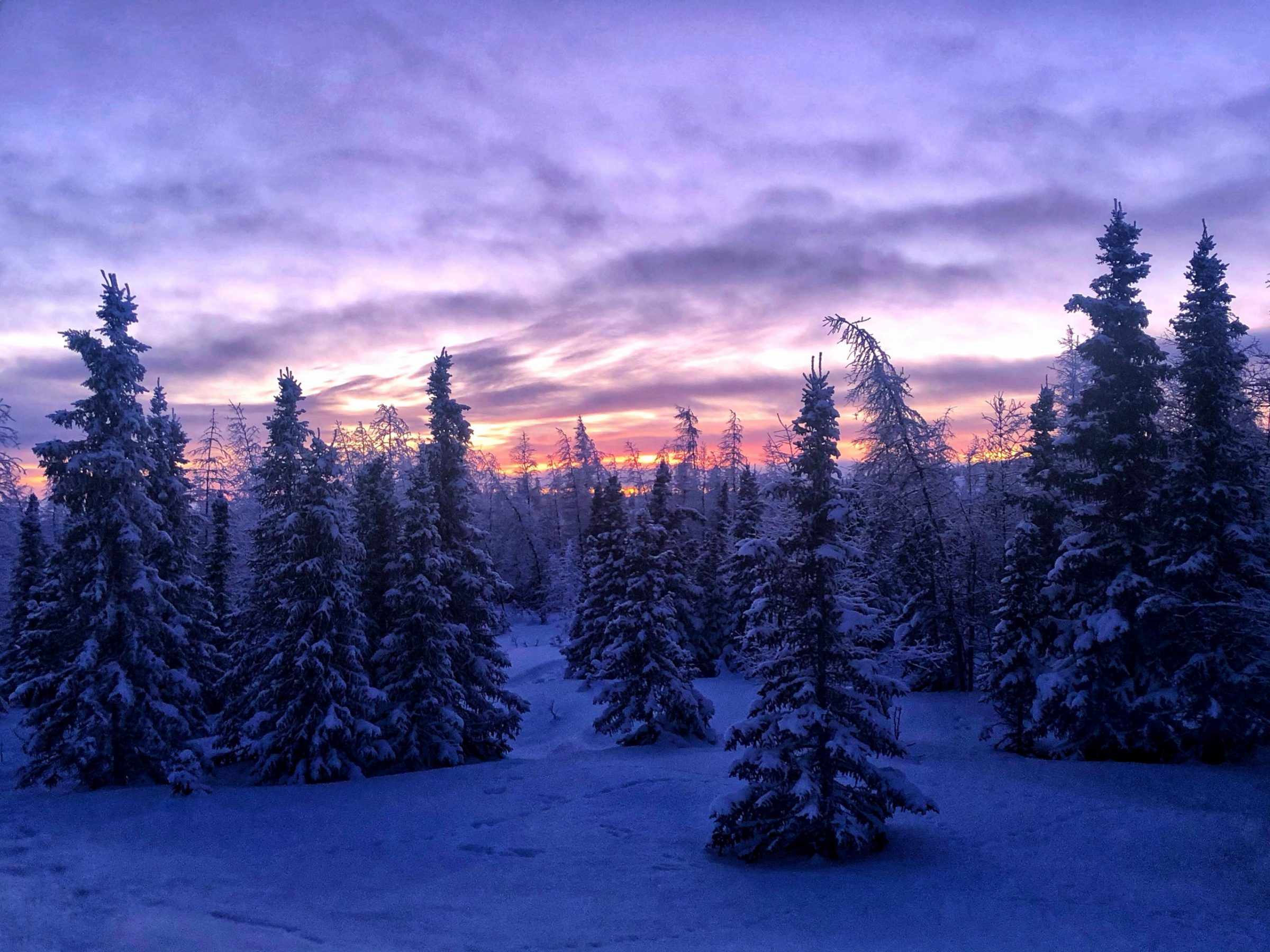 The sun sets on the frost-covered boreal forest outside Kuujjuaq on Jan. 28. (Photo by Isabelle Dubois)