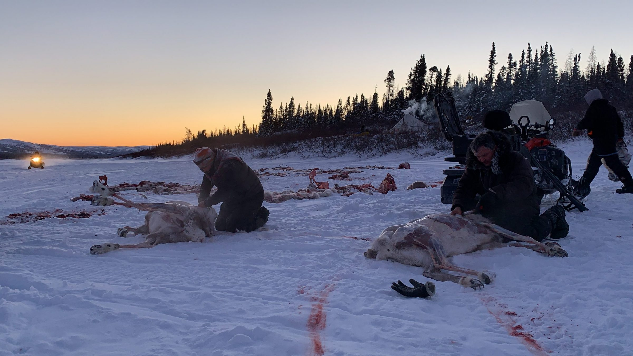 Daniel Gadbois, Etua Snowball and Tiivi Dupuis butcher caribou they've caught north of Kuujjuaq on Jan. 31 to provide meat for friends and family. (Photo by Malaya Qaunirq Chapman)