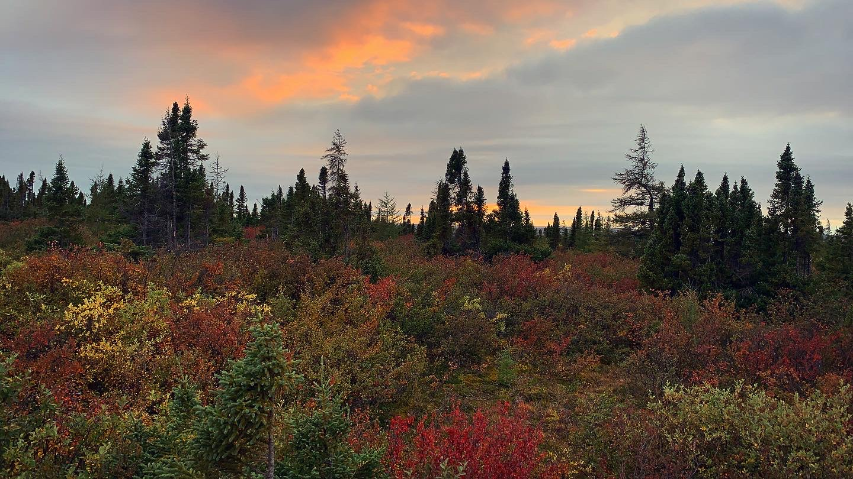 Fall colours are on display along Kuujjuaq's Ippialuk Road on Sept. 12. (Photo by Malaya Qaunirq Chapman)